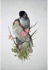 animaux-image-vintage-couple-d-oiseaux-rose