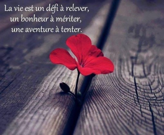 CITATION-BELLE-FLEUR-ROUGE